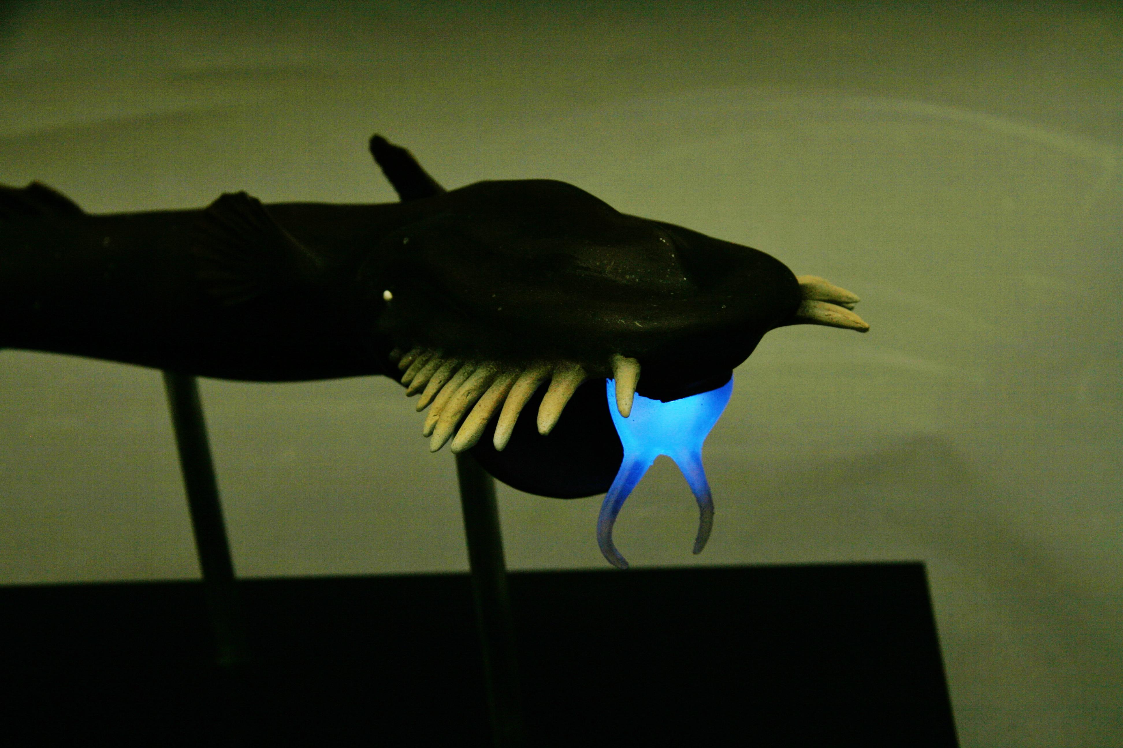 Wolf Trap Anglerfish Wolf Trap Angle...